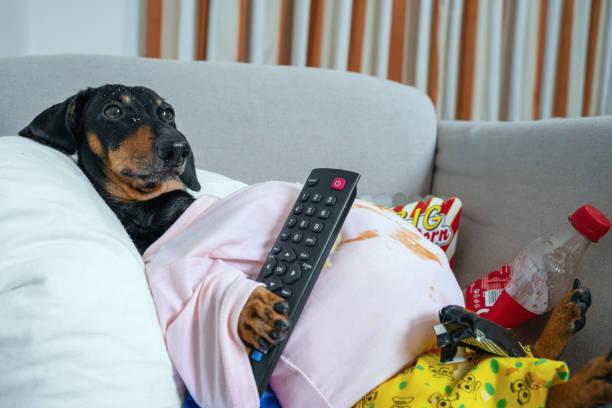 ver televisión en familia